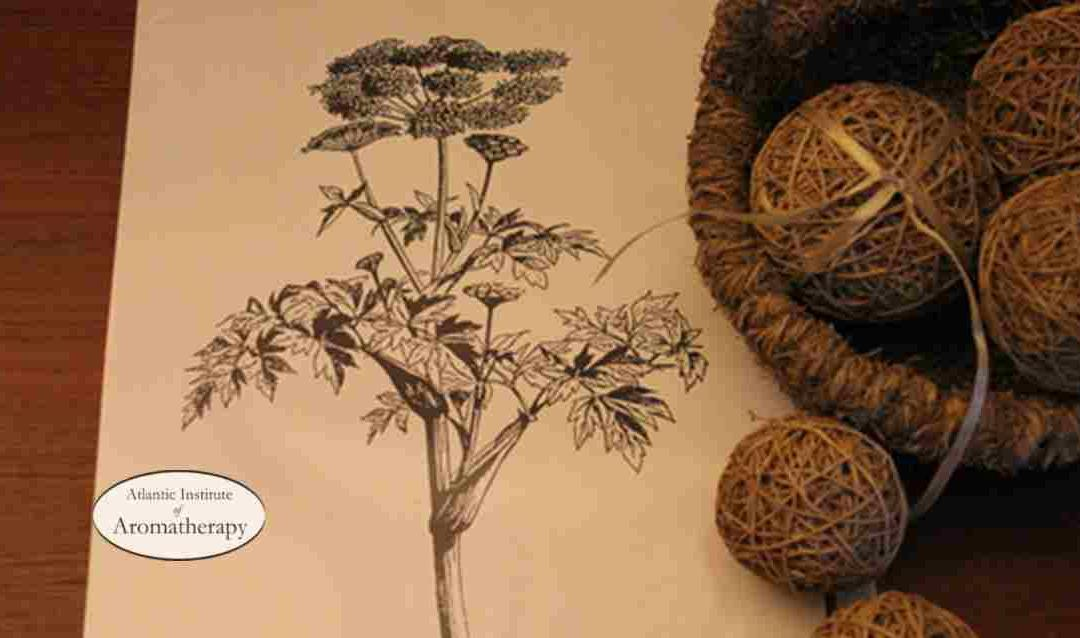 Down to Earth with Vetiver and Angelica